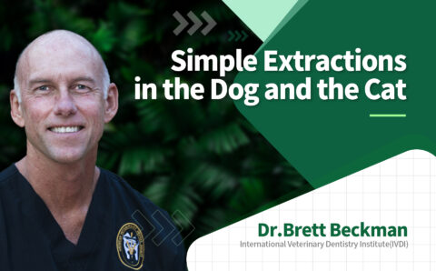 brett_01_Simple Extractions in the Dog and the Cat
