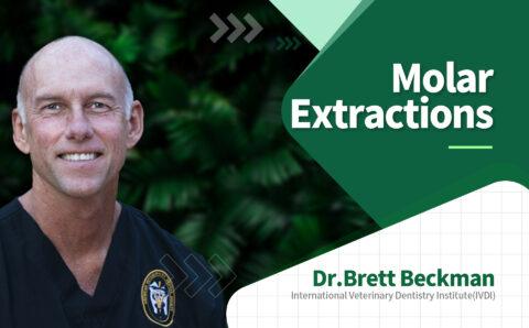 brett_06_Molar Extractions