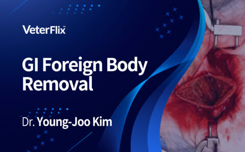 07.GI-Foreign-Body-Removal