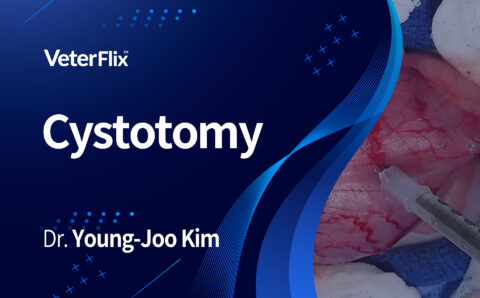 01.Cystotomy
