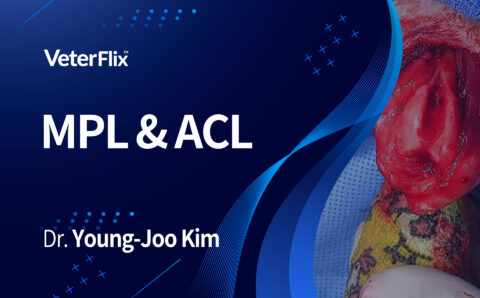 02.MPL-&-ACL