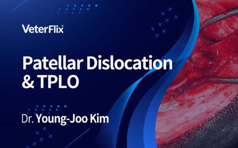 04.Patellar-Dislocation-&-TPLO